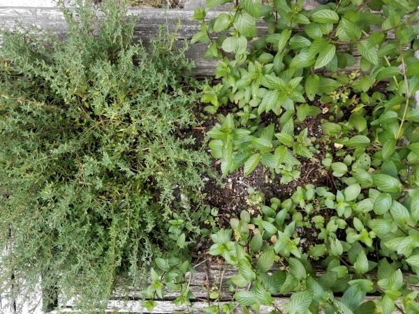 GA herbs
