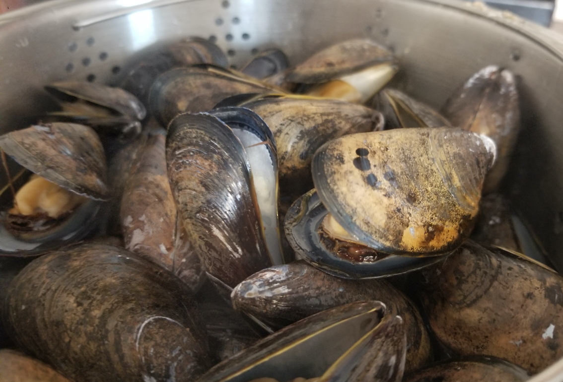 BER mussels